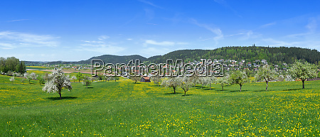 spring meadow with flowering trees on