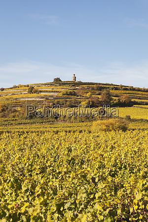 germany rhineland palatinate pfalz german wine