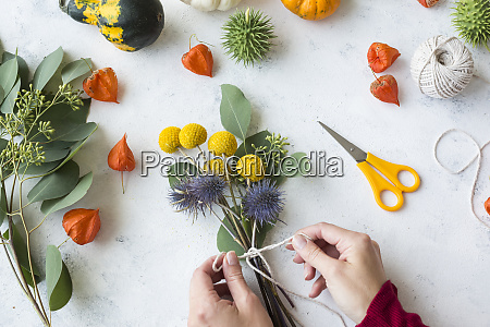 autumnal decoration ornamental pumpkins womans hand