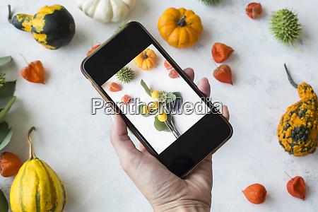 autumnal decoration ornamental pumpkins woman taking