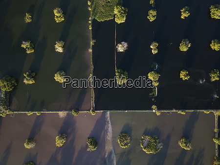 indonesia bali aerial view of mangroves