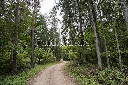 forest in latvia