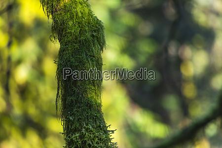 tree trunk moss grown bokeh in