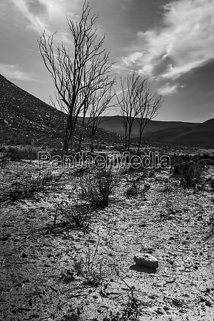 africa south africa landscape black and