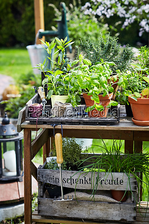rustic wooden garden table with potted