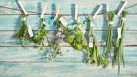 different named fresh herbs hanging on
