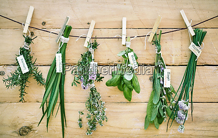 assorted bunches of fresh herbs with