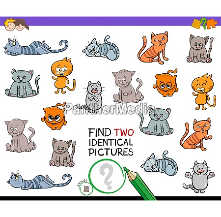 find two identical cats game for