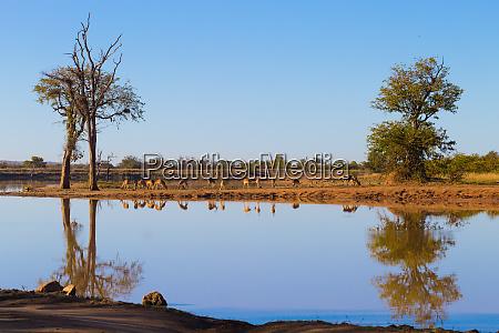 kruger national park reflections on lake