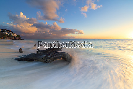 tree trunk on ffryes beach at