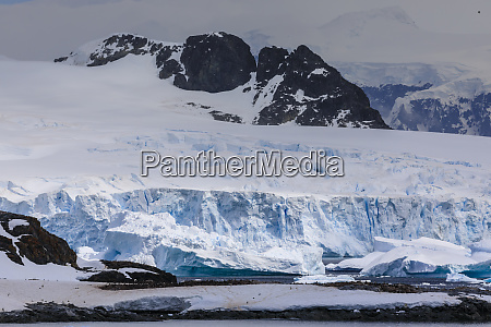 penguin colonies icebergs and glaciers cuverville