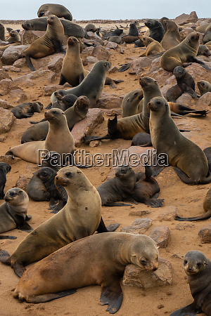 seals alert at one of worlds