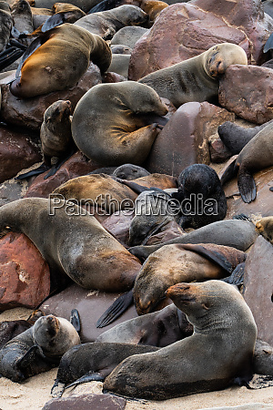 seals slumber at one of worlds