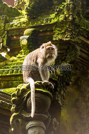 sacred monkey forest in ubud bali