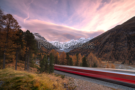bernina express train and colorful woods