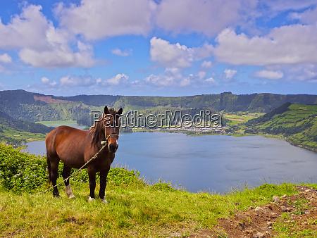horse with lagoa das sete cidades