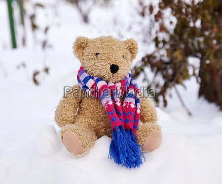 old teddy bear in a scarf
