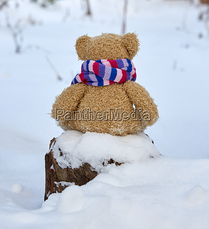 brown teddy bear in a bright