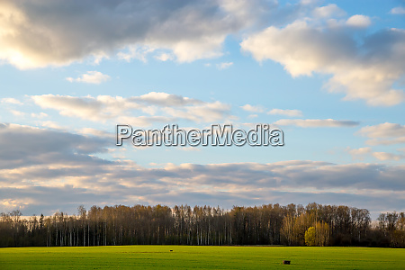 landscape with cereal field forest and