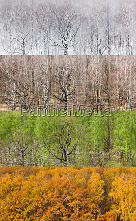 panoramic views of forest in four