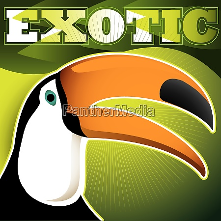 designed exotic banner with toucan