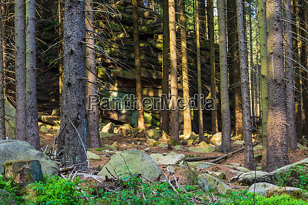 landscape with trees in the harz