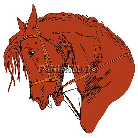 vector version black horse silhouette isolated