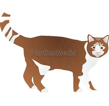 vectors of domestic cat