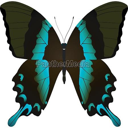 beautiful vector butterfly