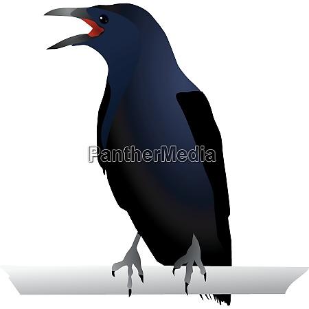 vectors raven