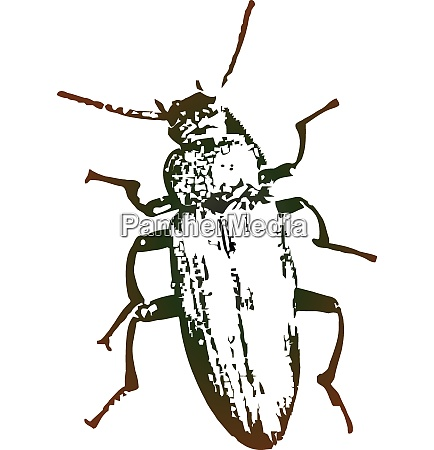 vector artwork will a beetle