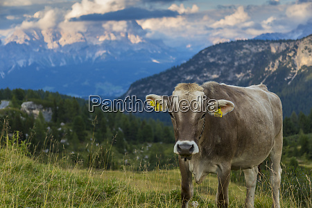 view of landscape and cattle from