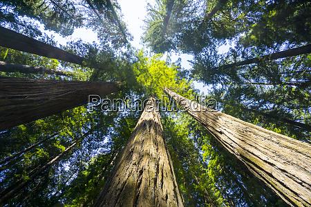 redwood state park unesco world heritage
