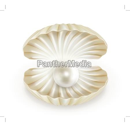 pearl vector