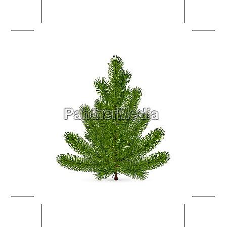 spruce high quality
