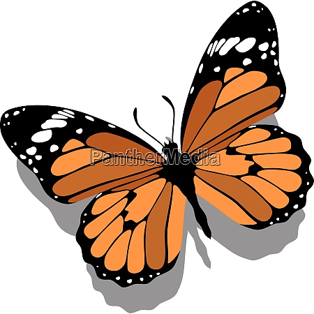 vector butterfly on paper 11