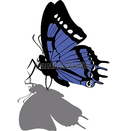 vector butterfly on paper 07