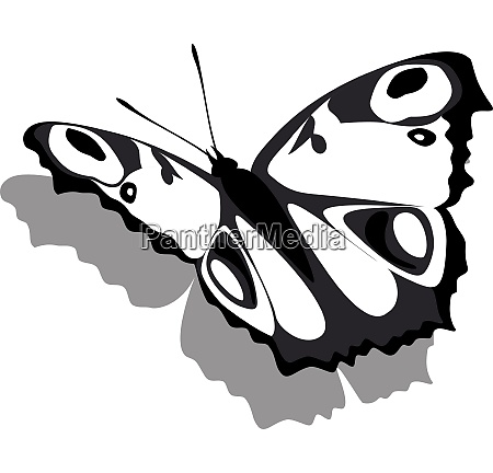 vector butterfly on paper 13