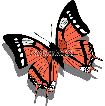 vector butterfly on paper 05