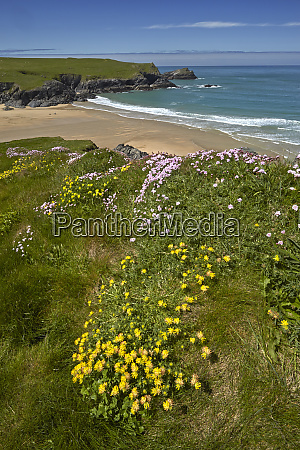yellow kidney vetch and pink thrift