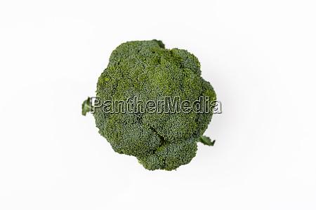 broccoli brassica oleracea