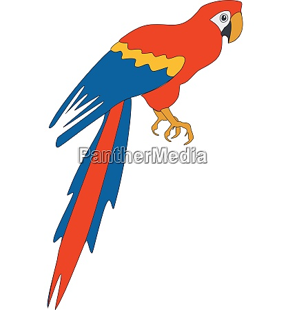 bird parrot in color 03