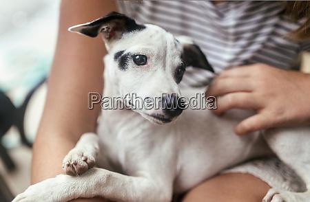 portrait of puppy on girls lap