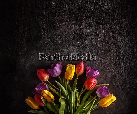 vibrant colorful tulips