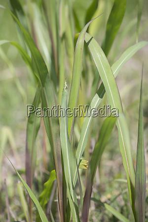 tall thick grass