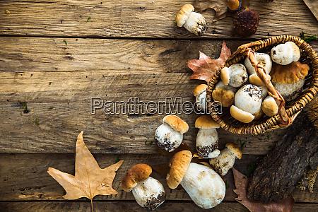 autumn cep mushrooms on wood