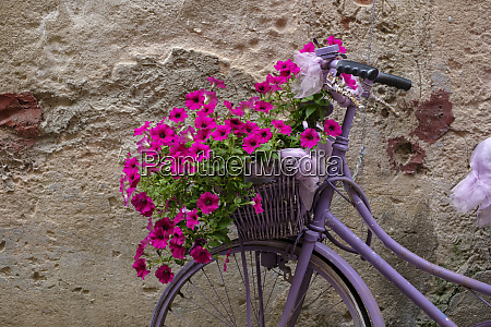 italy old bicycle with flowers