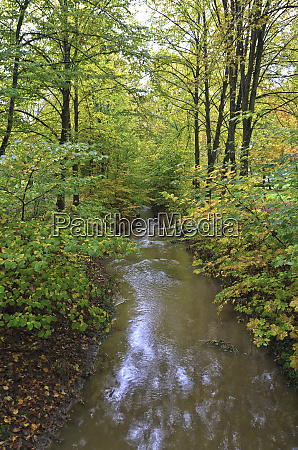 autumnally forest with stream course