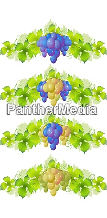 vine design element