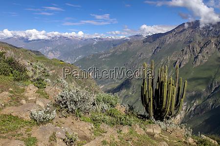 hiking trail at colca canyon to